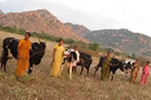 Bellota Agrisolutions consacre 155 vaches pour la créaction de ressources en Inde